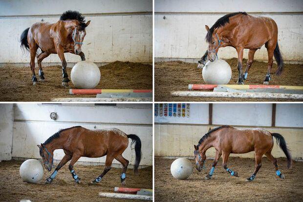 CAV Fotowettbewerb BR ballverrückte Pferde Anna & Lara Stuppia