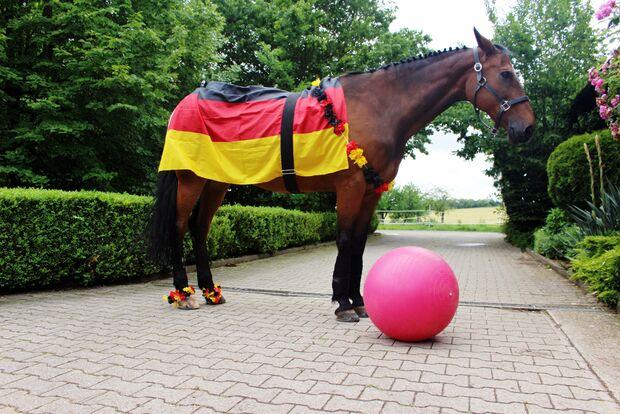 CAV Fotowettbewerb BR ballverrückte Pferde Annabelle Re