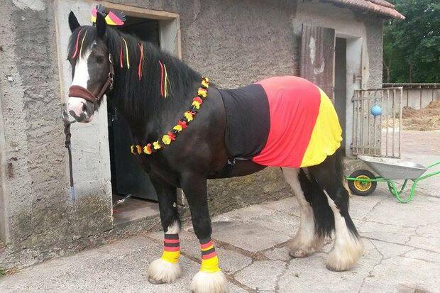 CAV Fotowettbewerb BR ballverrückte Pferde Denise Engels