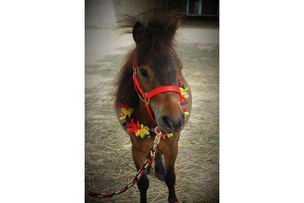 CAV Fotowettbewerb BR ballverrückte Pferde Franziska Friebertz