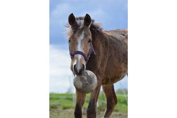 CAV Fotowettbewerb BR ballverrückte Pferde Giuliana Brockhaus