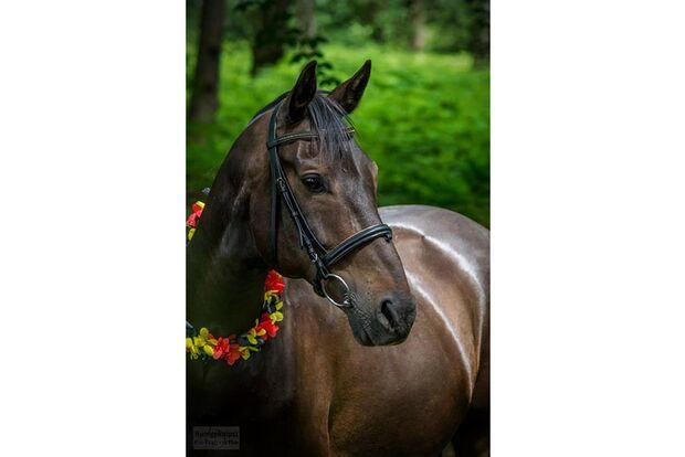 CAV Fotowettbewerb BR ballverrückte Pferde Janina Widuch