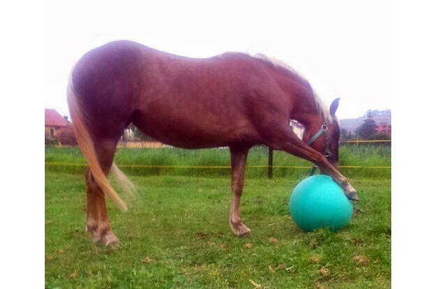 CAV Fotowettbewerb BR ballverrueckte Pferde Katrin Rennhack