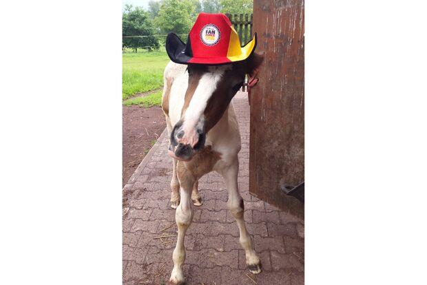 CAV Fotowettbewerb BR ballverrückte Pferde Laura Zorn