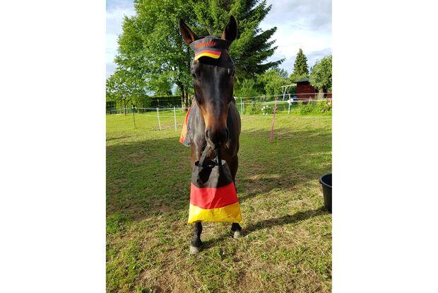 CAV Fotowettbewerb BR ballverrückte Pferde Lena Wenning