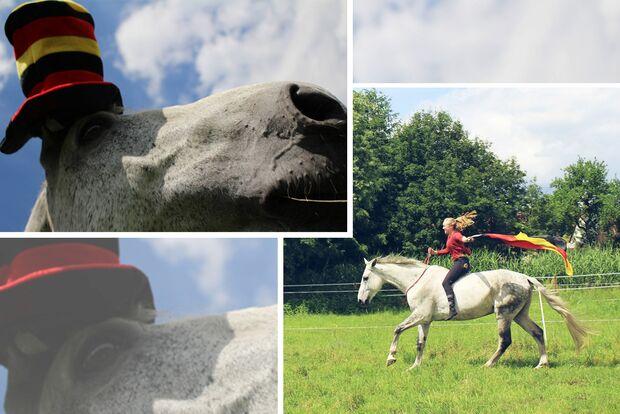CAV Fotowettbewerb BR ballverrückte Pferde Leo Domke