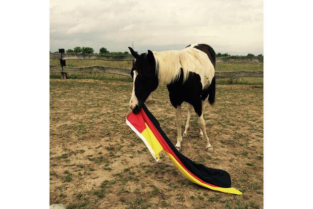CAV Fotowettbewerb BR ballverrückte Pferde Lisa Schiller