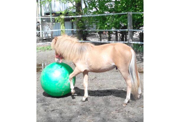 CAV Fotowettbewerb BR ballverrückte Pferde Lisa Schossler