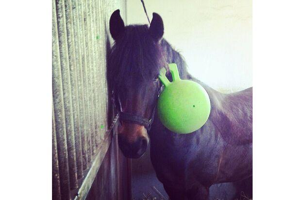 CAV Fotowettbewerb BR ballverrückte Pferde Nadine Lefler