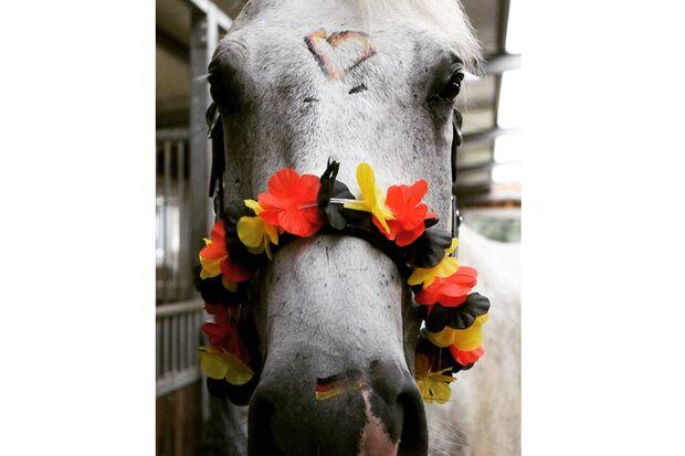 CAV Fotowettbewerb BR ballverrückte Pferde Sarah Hube