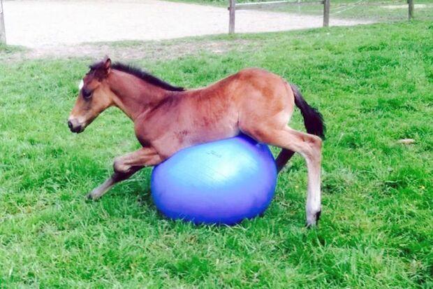 CAV Fotowettbewerb BR ballverrückte Pferde Stefanie Junker