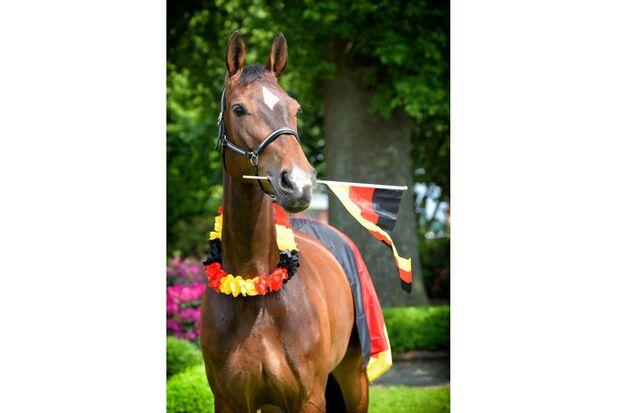 CAV Fotowettbewerb BR ballverrückte Pferde Y. Voss