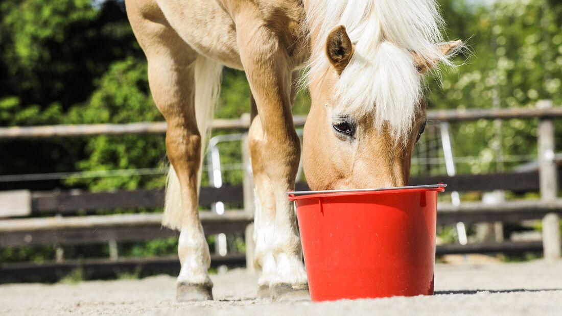 CAV Fressendes Pferd futter Fütterung Aufmacher