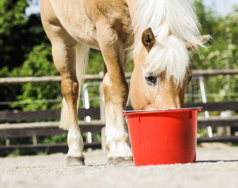 Pferd Frisst Kot