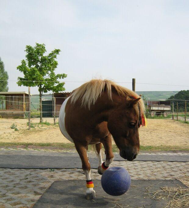 CAV Fußball-WM mit Pferden Felix