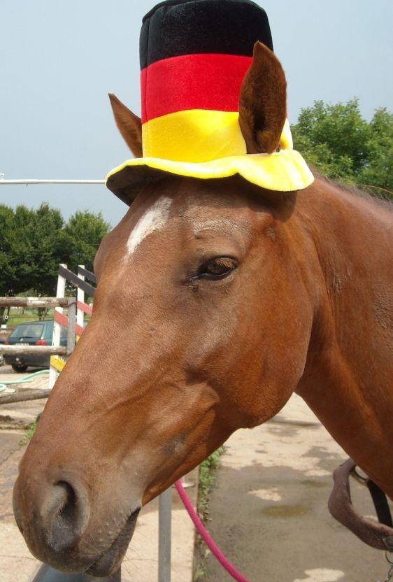 CAV Fußball-WM mit Pferden Scottie