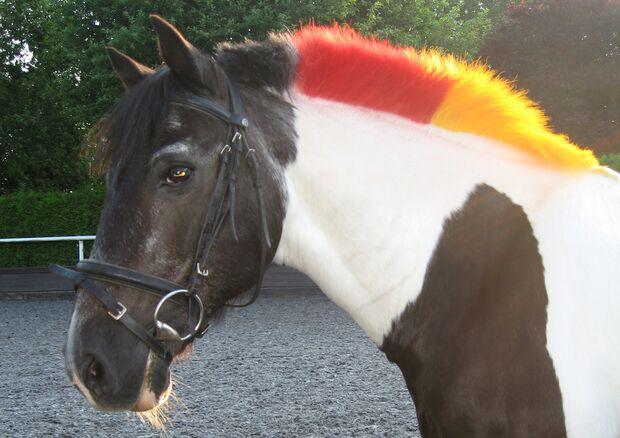 CAV Fußball-WM mit Pferden Stechele