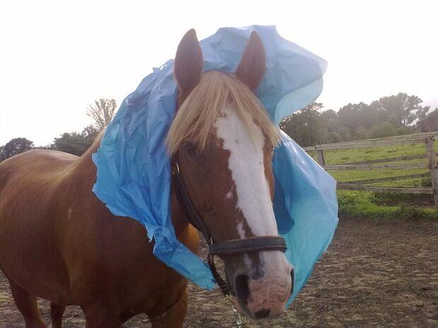 CAV GHP Schräge Pferdefotos