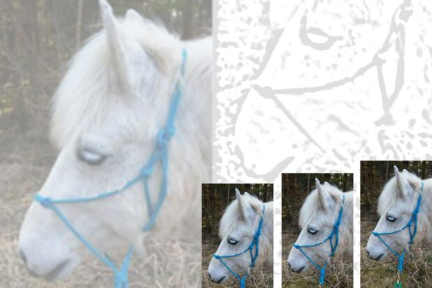 CAV Geburtstagspferde Astrid Monty