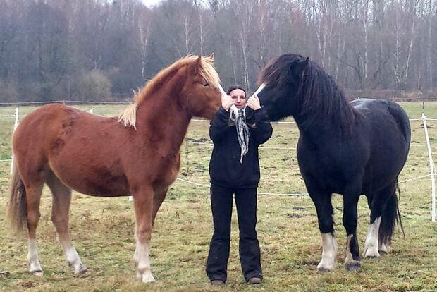 CAV Geburtstagspferde Carmen Kaminski Hazur