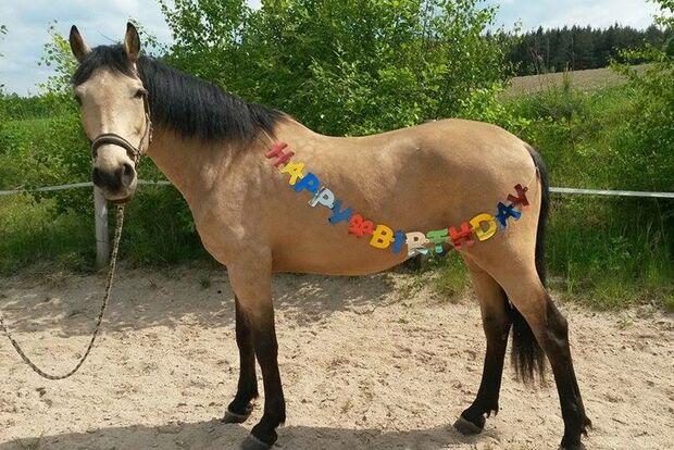 CAV Geburtstagspferde Diana Landgraf Pohle