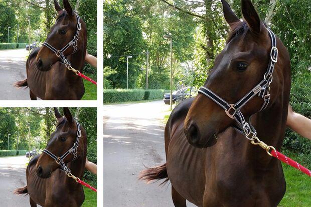 CAV Geburtstagspferde Gabi Klütsch Donni
