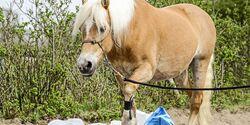 CAV Gelassenheit Pferd Test Aufmacher