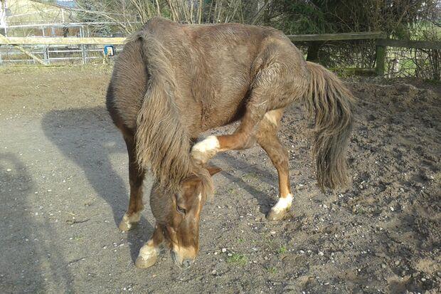 CAV Gelenkige Pferde Leserfotos Diana Ahlborn