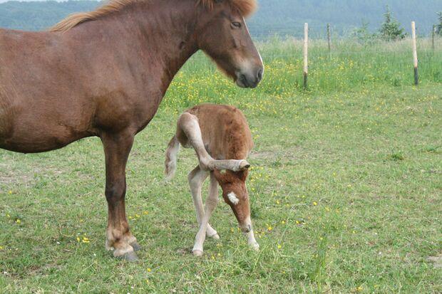 CAV Gelenkige Pferde Leserfotos Eva Wasl