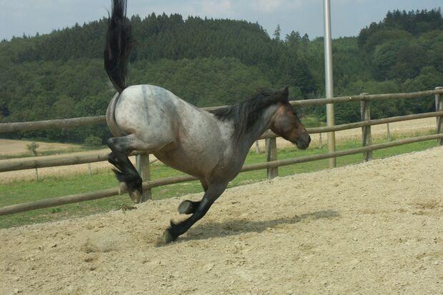CAV Gelenkige Pferde Leserfotos Katja Weidekamp