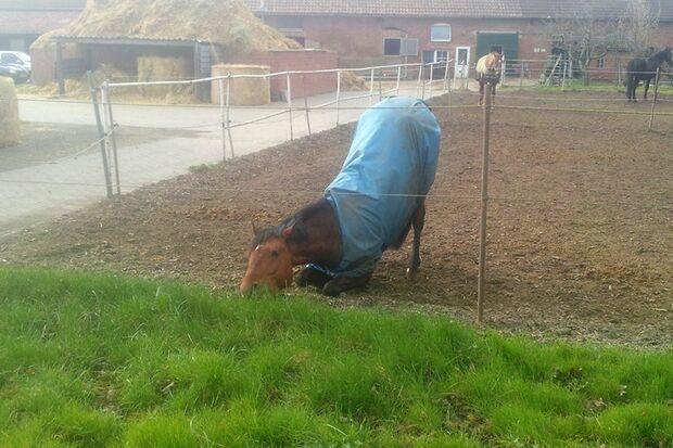 CAV Gelenkige Pferde Leserfotos Manja Bonas