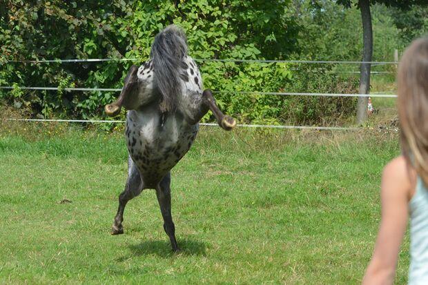 CAV Gelenkige Pferde Leserfotos Nadine Kubinke 1
