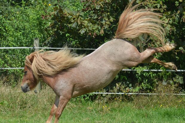 CAV Gelenkige Pferde Leserfotos Nadine Kubinke 2