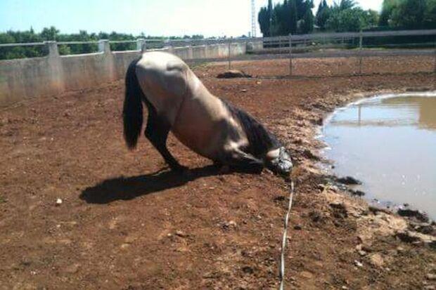 CAV Gelenkige Pferde Leserfotos Sandy Hofner