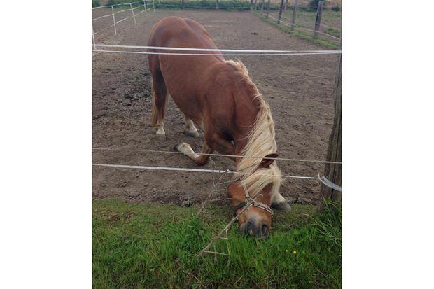 CAV Gelenkige Pferde Leserfotos Stephanie Gleich