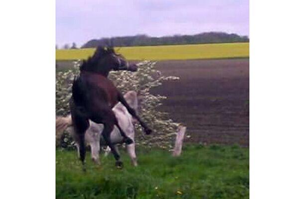 CAV Gelenkige Pferde Leserfotos Stephanie Hülle