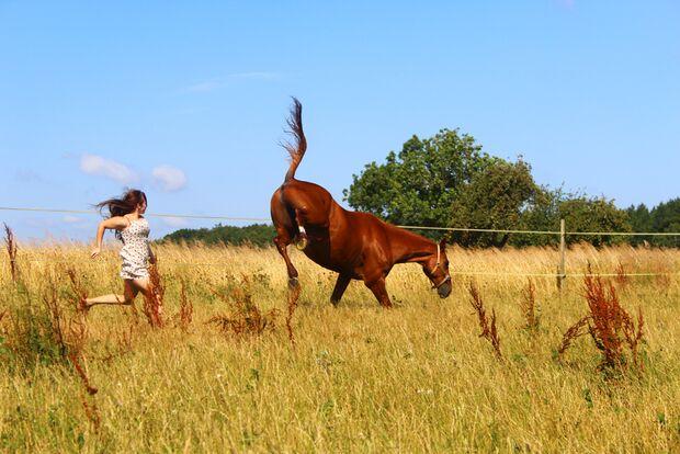 CAV Gelenkige Pferde Nane Möller