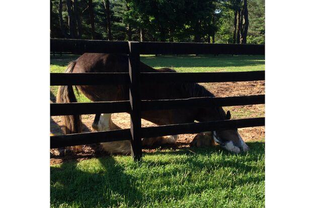 CAV Gelenkige Pferde dcusanelli