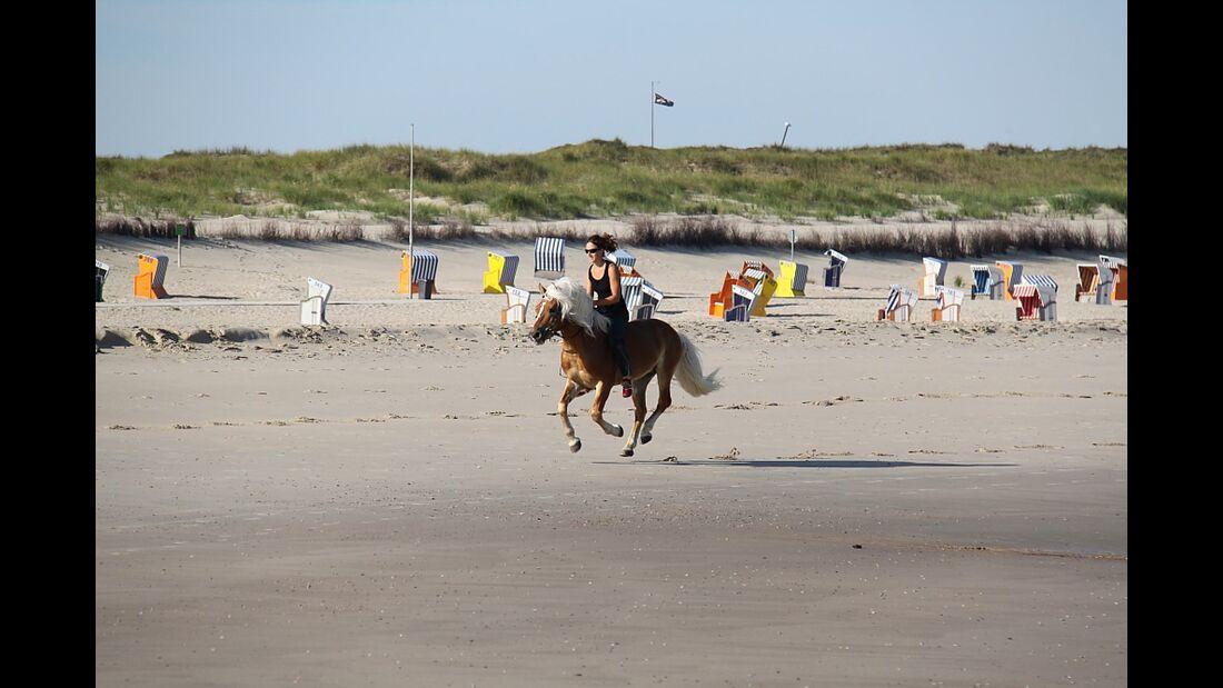 CAV Haflinger Norderney07 (jpg)