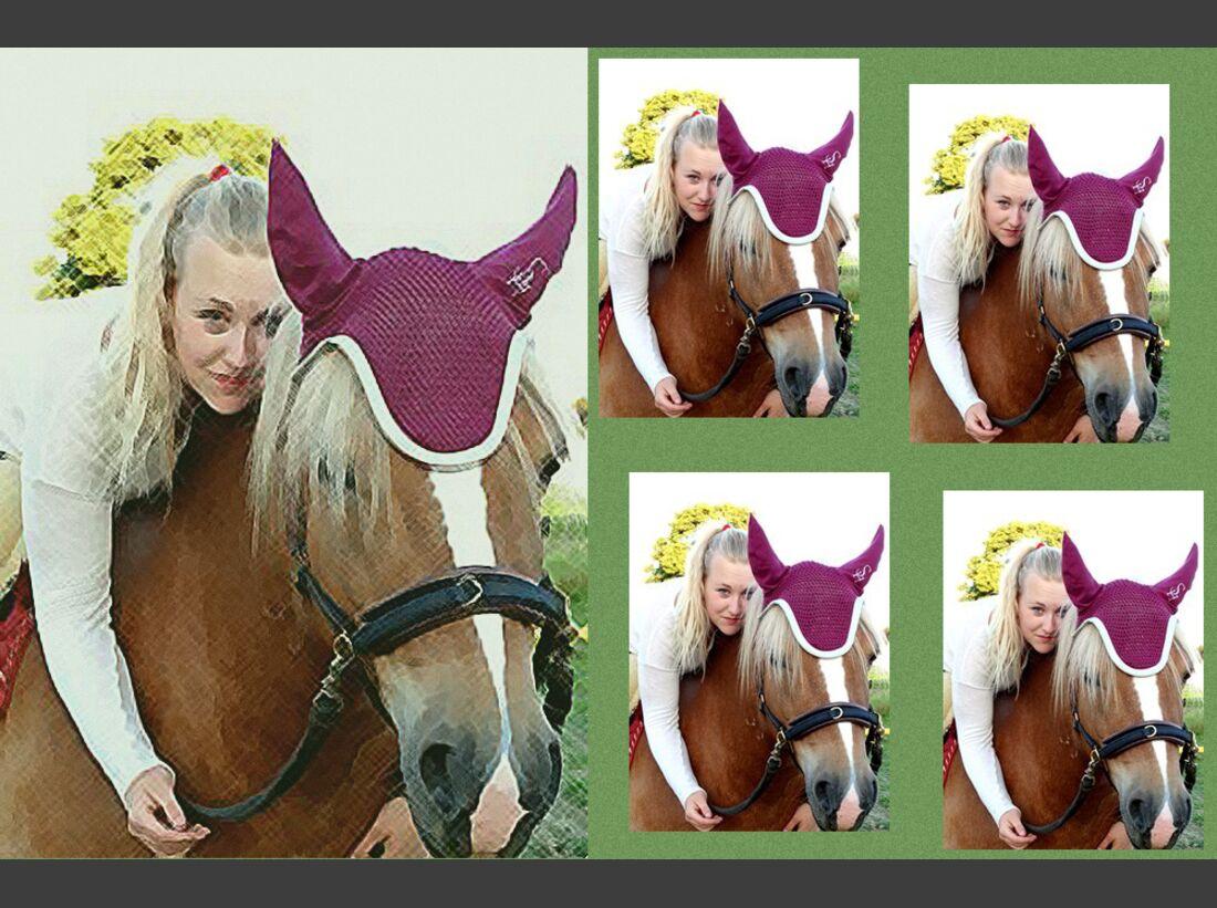 CAV Haflinger Pferderasse Rasse Leserfotos Christiane Opppwa
