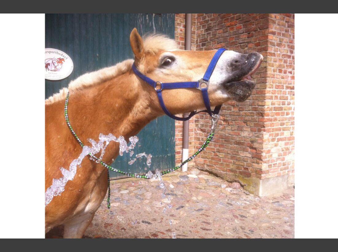 CAV Haflinger Pferderasse Rasse Leserfotos - Emy