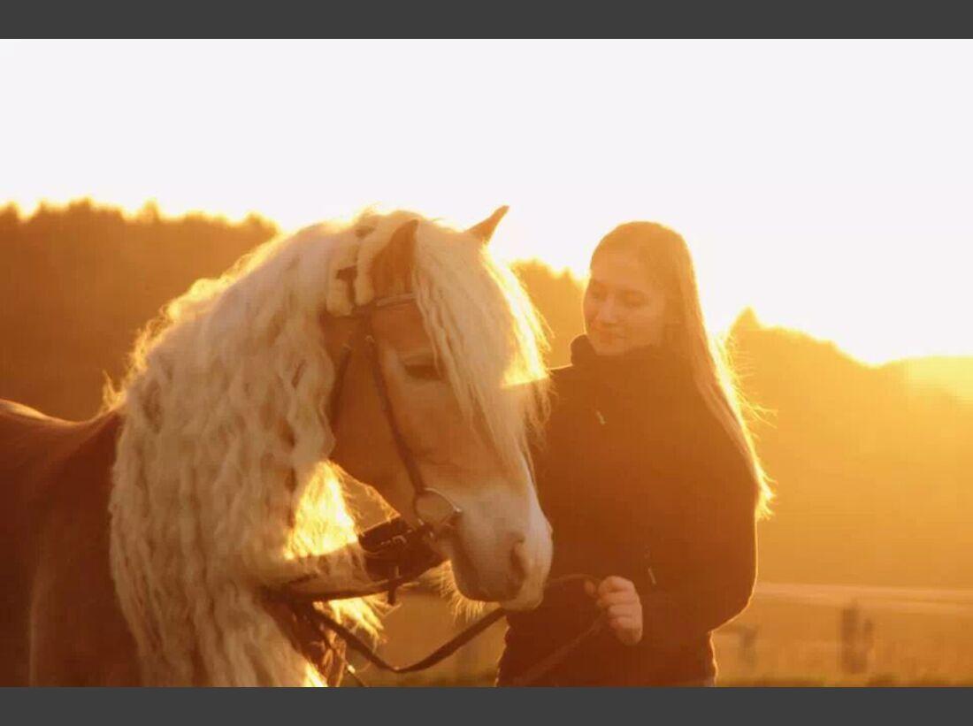 CAV Haflinger Pferderasse Rasse Leserfotos Julia Steindl