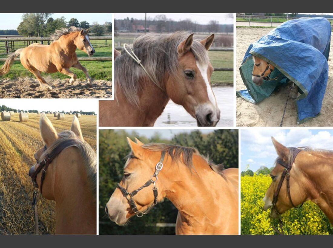 CAV Haflinger Pferderasse Rasse Leserfotos - Miriam Tatura