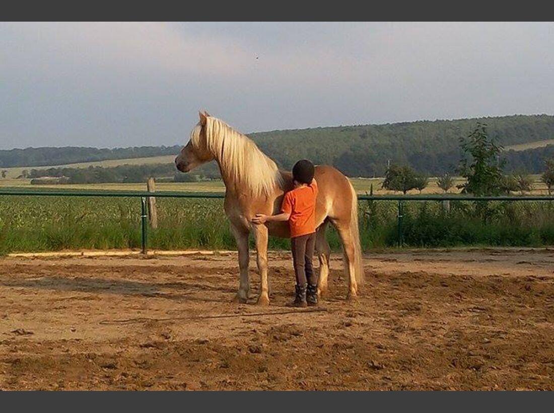 CAV Haflinger Pferderasse Rasse Leserfotos Nicole Trebeck