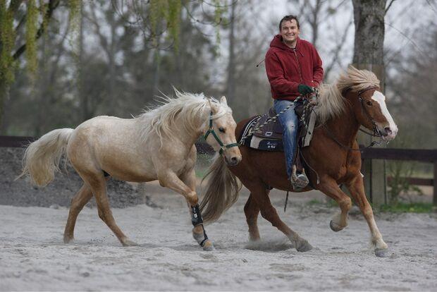 CAV Handpferd Jungpferd Junge Pferde