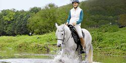 CAV Harmonie Pferd und Reiter 1
