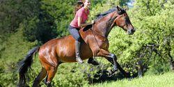 CAV Harmonie Pferd und Reiter 2