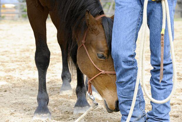 CAV Harmonie Pferd und Reiter 3