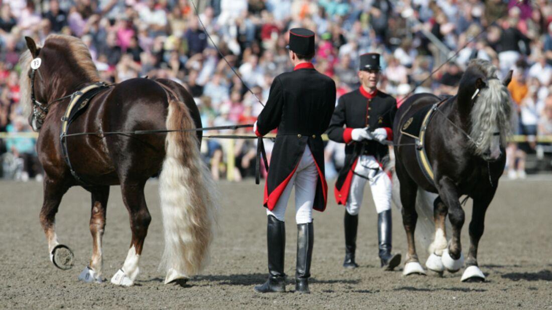 CAV Hengstparade Marbach Gewinnspiel 2009