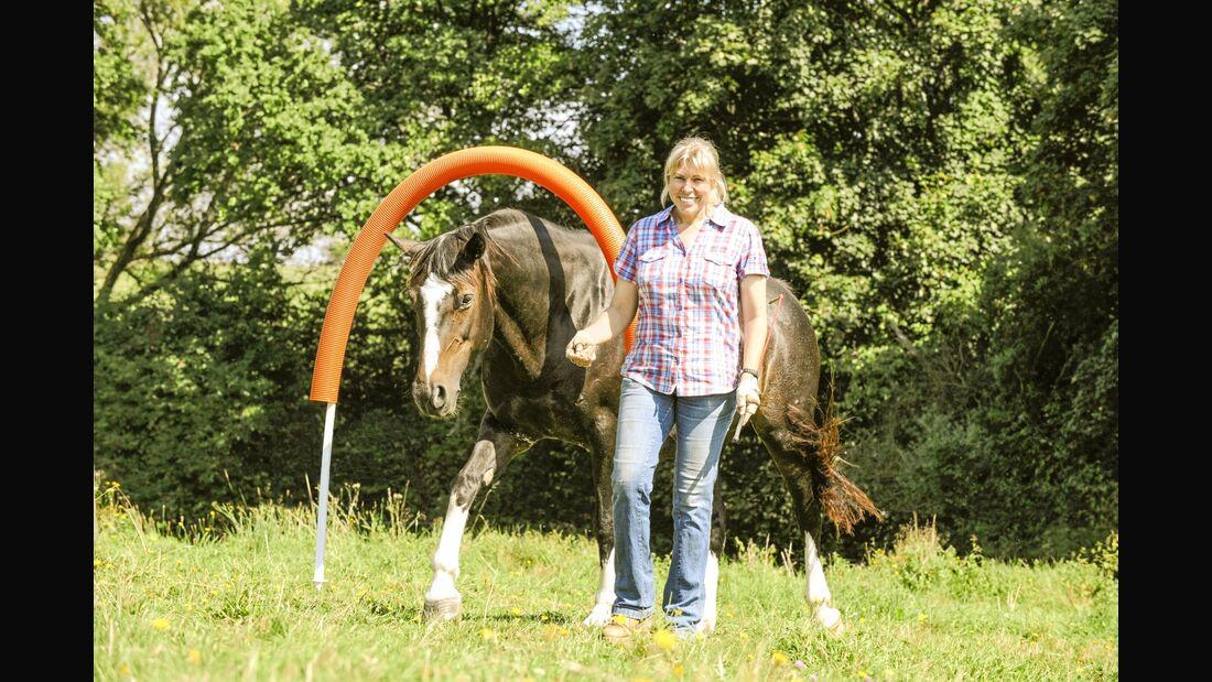 CAV Horse Agility Aufmacher